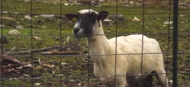 Obama&#8217;s Dire Sequestration Warning Intercut With Screaming Goat