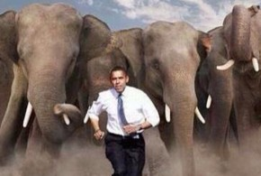 This is How Barack Obama Feels This Evening tweet elephants chasing Obama Republicans Take the Senate: Best Tweets from Election Night 2014